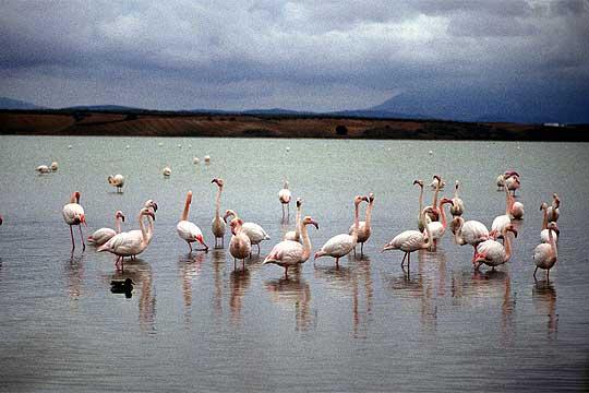 Lagune de Fuente Piedra, Antéquéra, Malaga