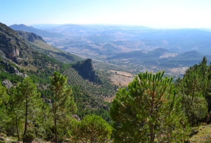 Parc Naturel Sierra de Grazalema, Cadix (Andalousie)